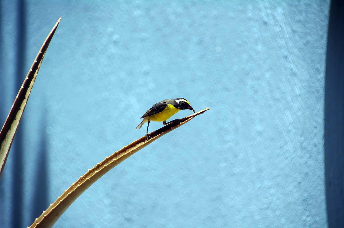 Vogel auf Curacao