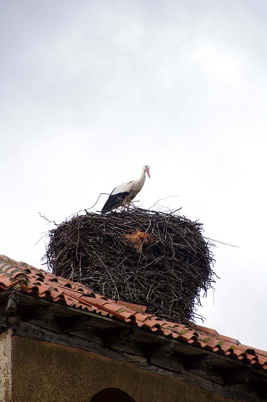 Fast jeder Kirchturm ist auf der iberischen Halbinsel von Störchen besetzt