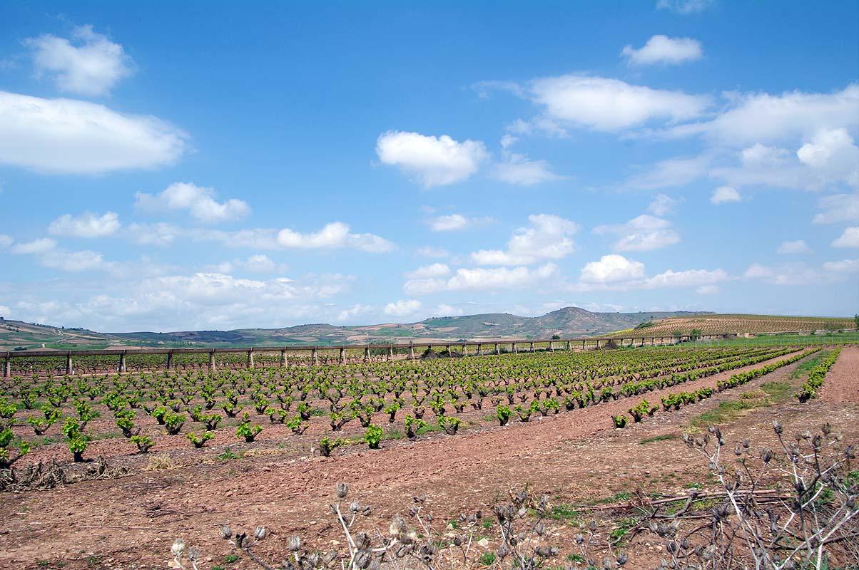 Durch das Rijoa Weinanbaugebiet