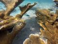 Unterwasserwelt Curacao