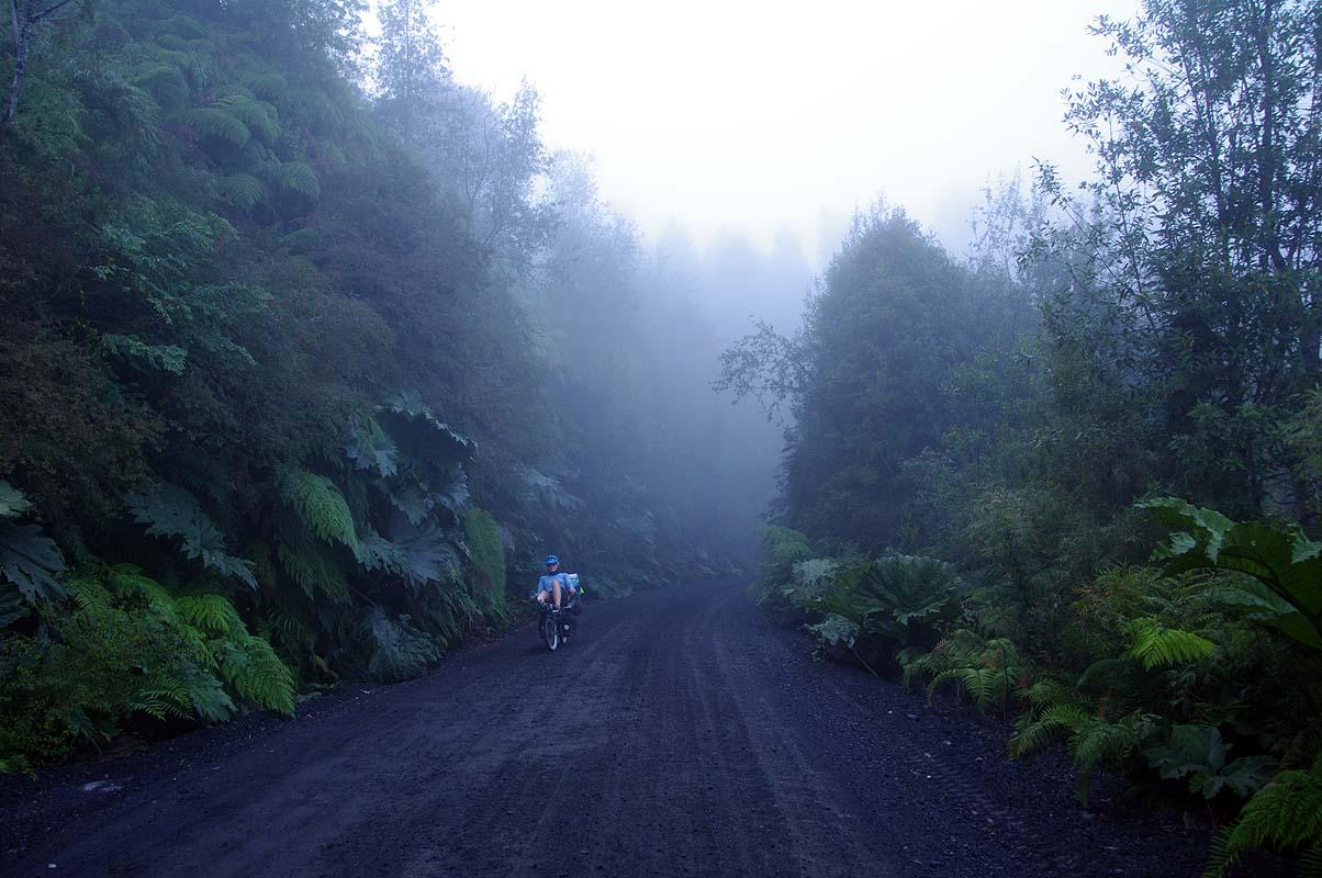Feucht-kalter Regenwald