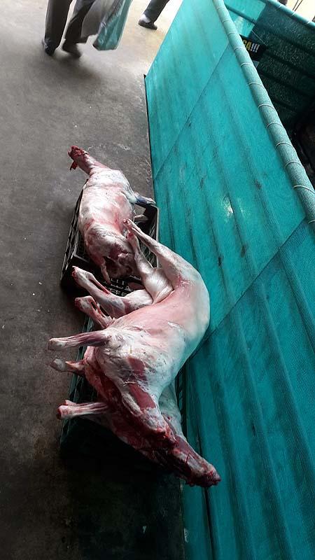 Markt mit Schweinen in Puerto Montt
