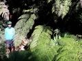 Alles überdimensioniert im Regenwald
