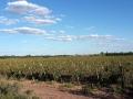 Weinanbau rund um Mendoza
