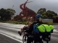 Rießenkrabbe auf dem Weg nach Adelaide