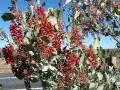 Die ersten roten Blüten seit einigen 1000 km