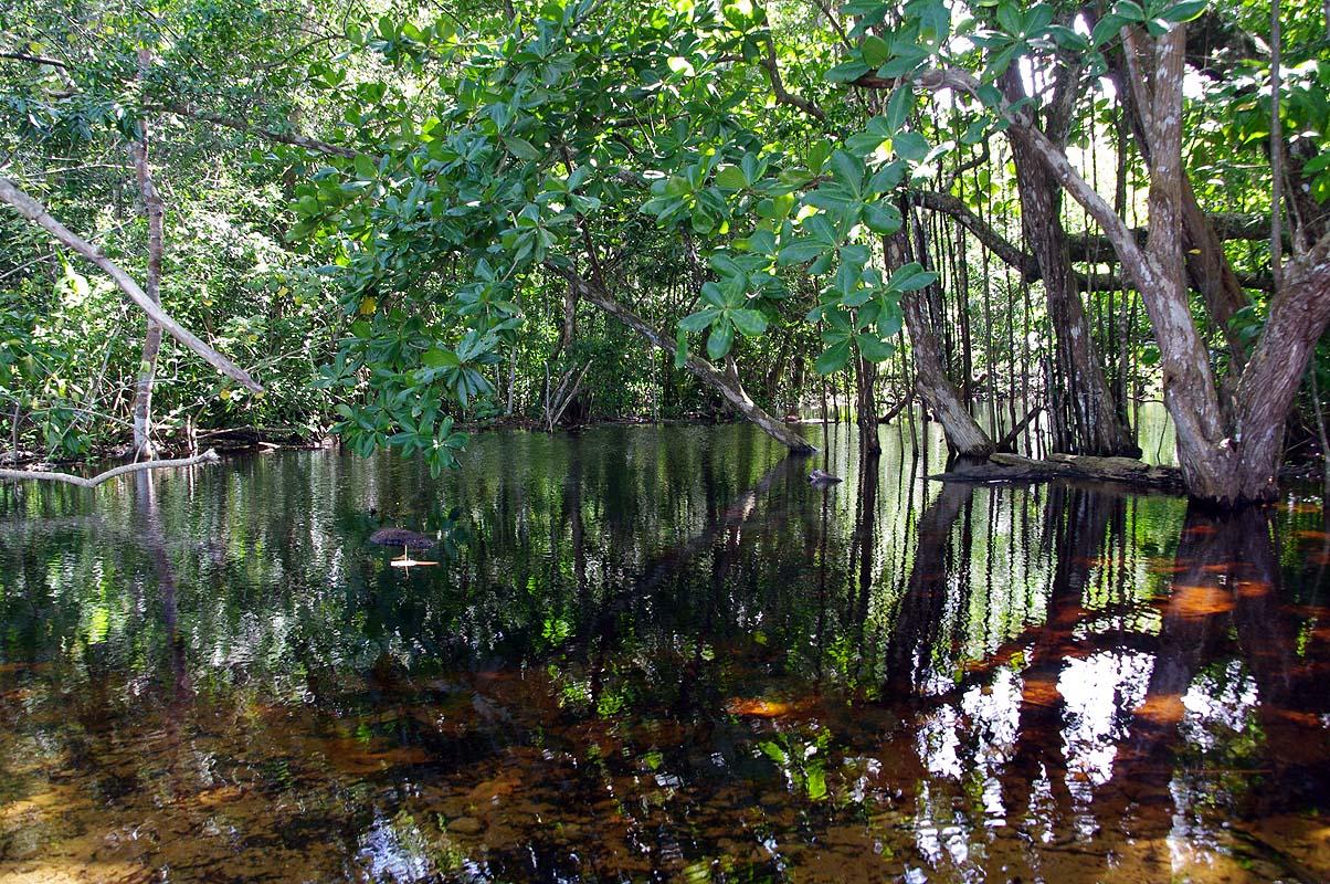 Regenwald Sumpf, was hier wohl alles rumpaddelt ...