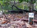 Ohne Insektenschutz ist man im Regenwald ersehnte Beute