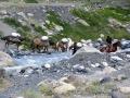 Transport via Pferden