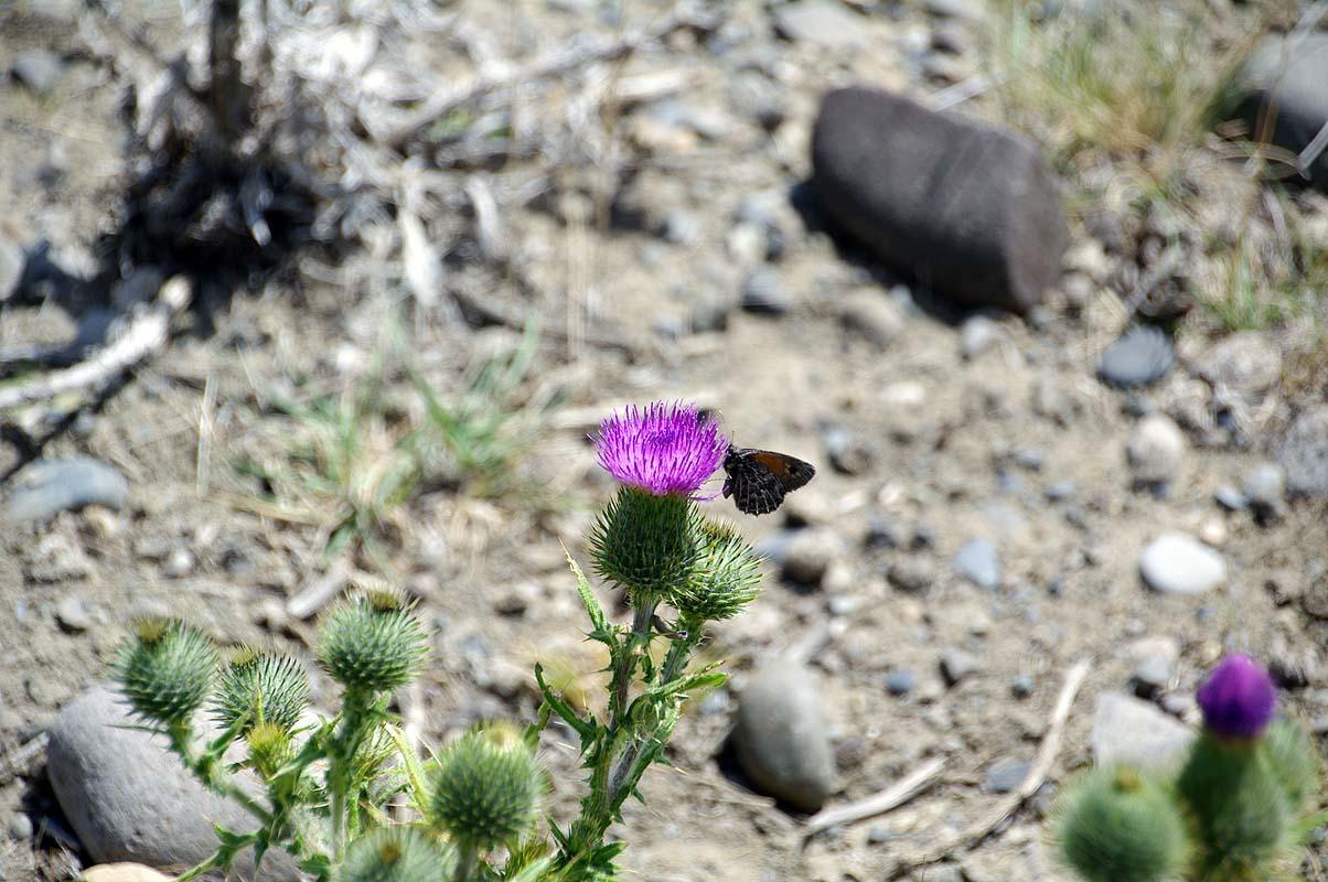 Schmetterlinge gibt´s auch hier