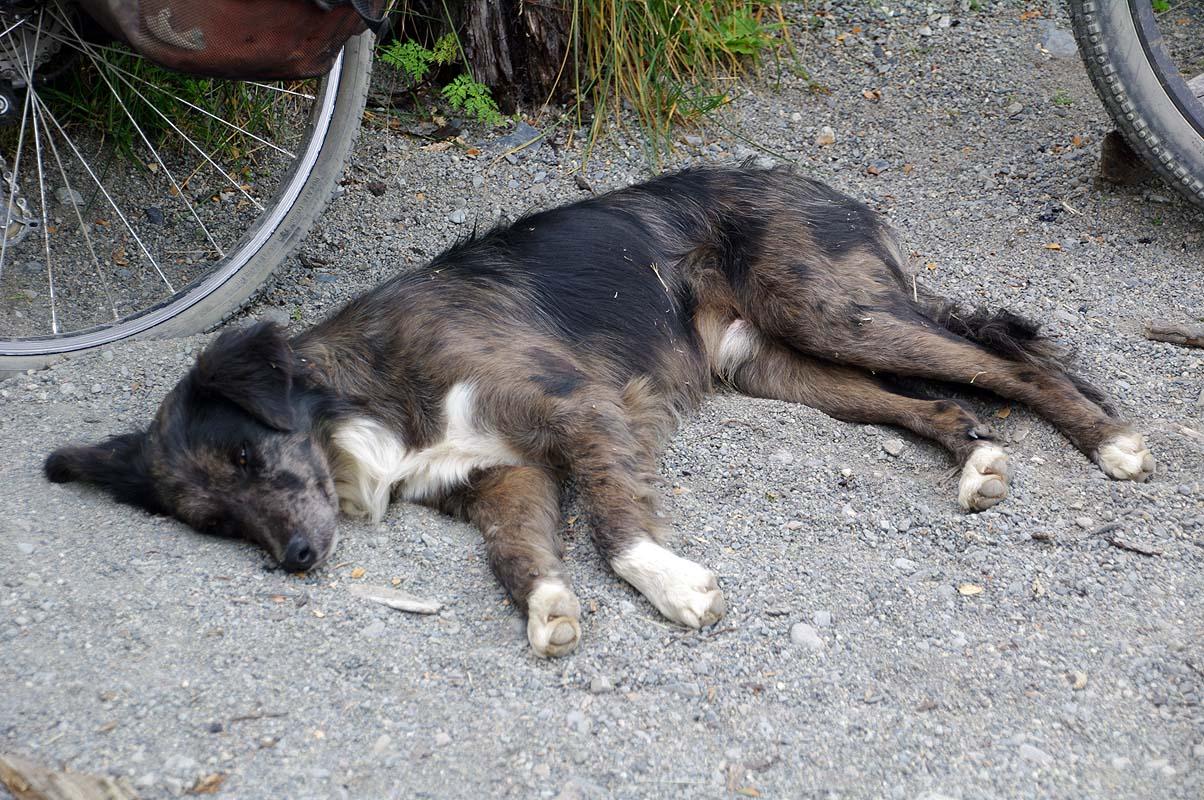 Hundemüde nach Wandertag und anspruchsvoller Abfahrt - nicht nur wir