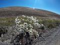 Seltene Farben in der Pampa