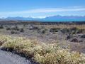 Lago Argentina bei Fahrt nach El Calafate
