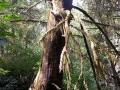 Etwas Regenwald-Style trotz der kühlen Temperaturen