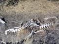 In Utah wieder viele tote Tiere (meißt Rotwild) am Straßenrand ...