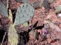 Mein kleiner grüner Kaktus ...